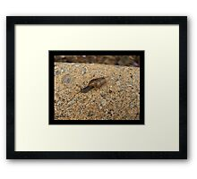 Snail Express Framed Print