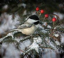 Snow requires red and one cute chickadee by Normcar