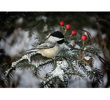 Snow requires red and one cute chickadee Photographic Print