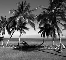 Belize Palm Trees by scottmarla