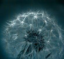 Wishing by Adriana Glackin