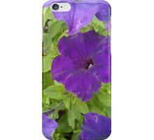 Dark Purple velvet petunia with green leaves iPhone Case/Skin