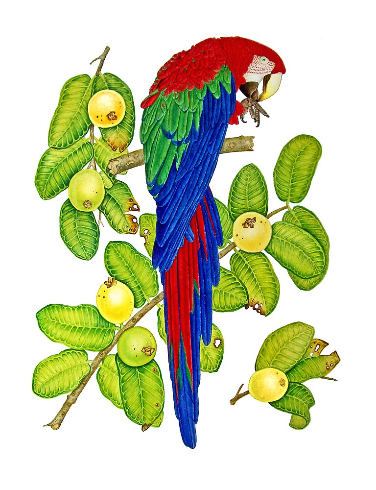 Macaw on Guava Branches by joeyartist