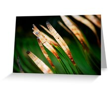 I Am A Leaf In The Wind... Kauai Sensual Series Greeting Card