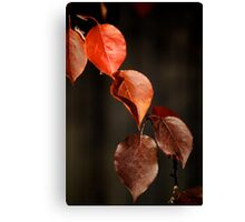 Red Leaves Of Autumn II Canvas Print