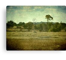 Racecourse Lagoon, Uralla, New South Wales Canvas Print