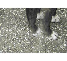Dog Feet Photographic Print