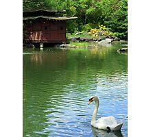 Auburn Botanic Gardens Photographic Print