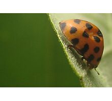 Lady on a leaf Photographic Print