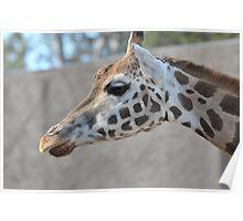 Giraffe II Poster