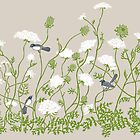 Queen Anne Lace by vian