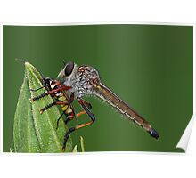 Robber Fly with Lunch Poster
