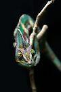 Karma Chameleon by Heather Prince