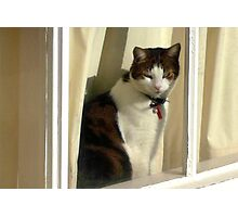 Max at the window Photographic Print