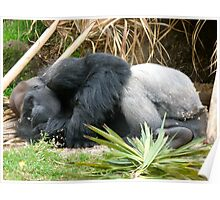 One very tired Gorilla Poster