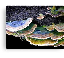 Back in Black............& Green, & Brown, & White.......... Canvas Print