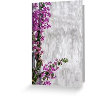 bougainvillea on wall as texture Greeting Card