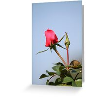 Valentine rosebud Greeting Card