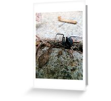 Creepy Crawly Red Back Spider Greeting Card