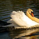 Swan in Motion by Honor Kyne