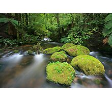 pure green Photographic Print