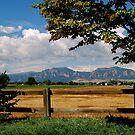 Colorado Flatirons by Pamela Hubbard