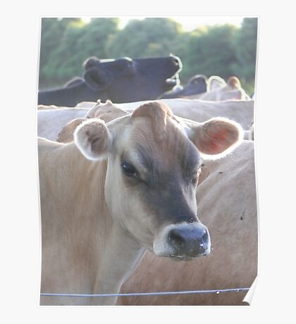 off for milking Poster