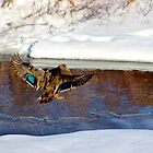 Landing Gear is Down! by Kathleen Daley