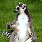 Ring Tailed Lemur by simonbreeze