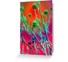 Rainbow Globe Artichokes Greeting Card
