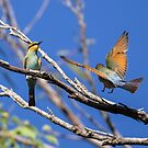Rainbow Bee-Eaters by Steve Bass