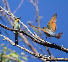 Rainbow Bee-Eaters by Steve Bass