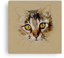 Mister Sprinkles; Tabby Cat Canvas Print