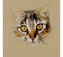Mister Sprinkles; Tabby Cat Photographic Print