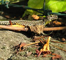 Lizard for Lina by Larasolnishko