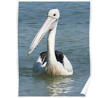Friendly Pelican Poster