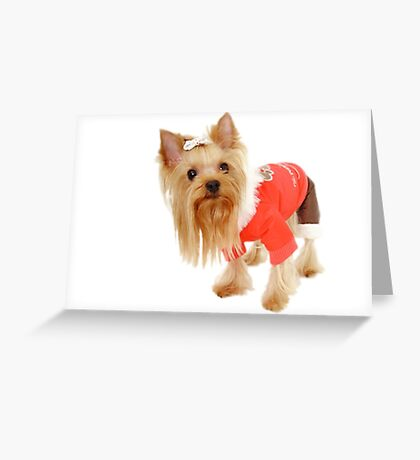 A little dog! Greeting Card