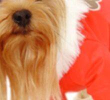A little dog! Sticker