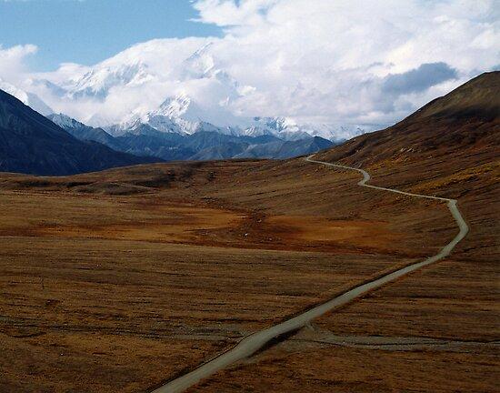 Alaska's Denali National Park by Patricia Montgomery