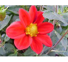Passionate Red Petals Photographic Print