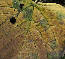 Big Fall Leaf by Stephen Thomas