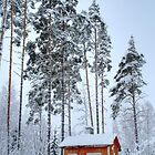 4.2.2015: Small and Abandoned Sauna III by Petri Volanen