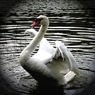 Swan Song by Roger Sampson
