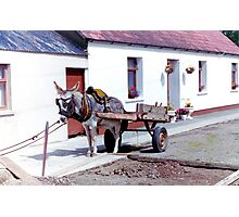The Last Wurkin' Donkey In Ireland... Photographic Print