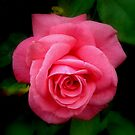 Pretty in Pink by Susan E. King