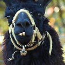 toothy llama by Kiny McCarrick