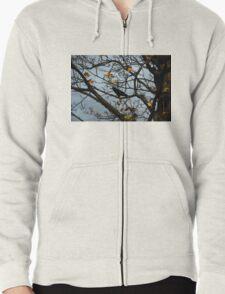 Autumn Zipped Hoodie