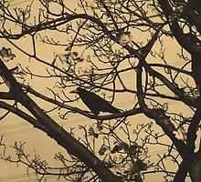 Branches by manahmanah
