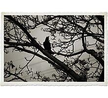 Black Photographic Print