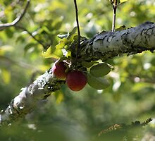 In The Orchard by Rebecca Brann